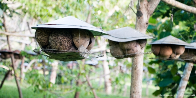 Bee houses in Balay Bahay sa Uma Bee Farm