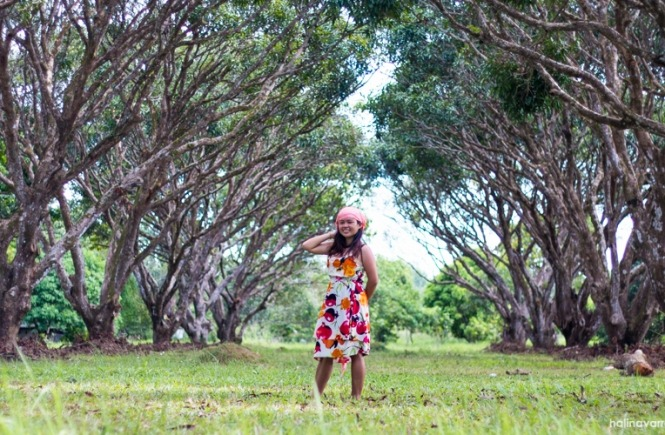 Mango plantation in Guimaras - can be visited on a day tour in Guimaras