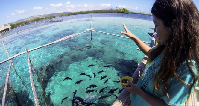 Juag Lagoon Fish Sanctuary in Sorsogon