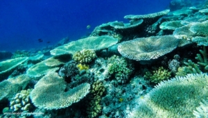 Coral garden in Apo Island, Negros Oriental | One of the best ecotourism destinations in the Philippines
