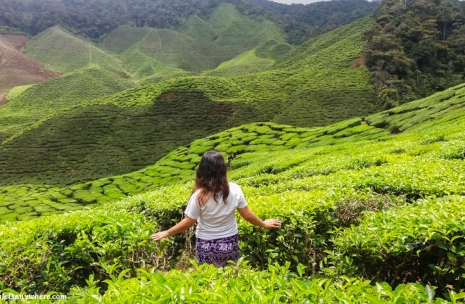 Cameron Valley tea plantation in Cameron Highlands, Malaysia