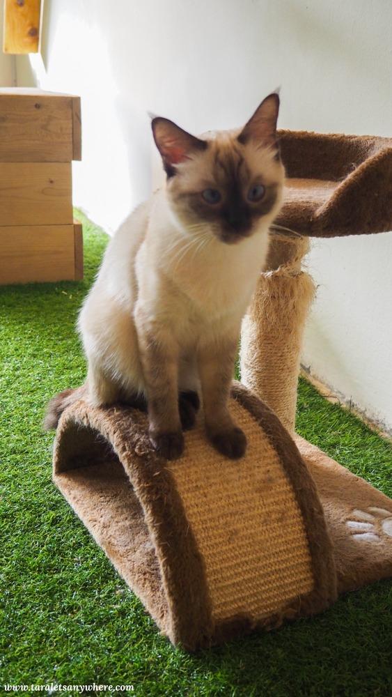 Purradise Cat Cafe in TTDI, Kuala Lumpur