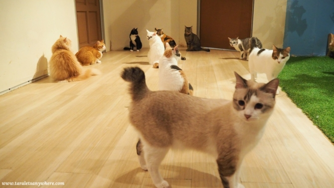 Cats in Purradise Cat Cafe