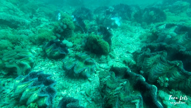 Giant Clam Sanctuary in Camiguin