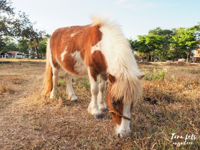 Ponyang the pony