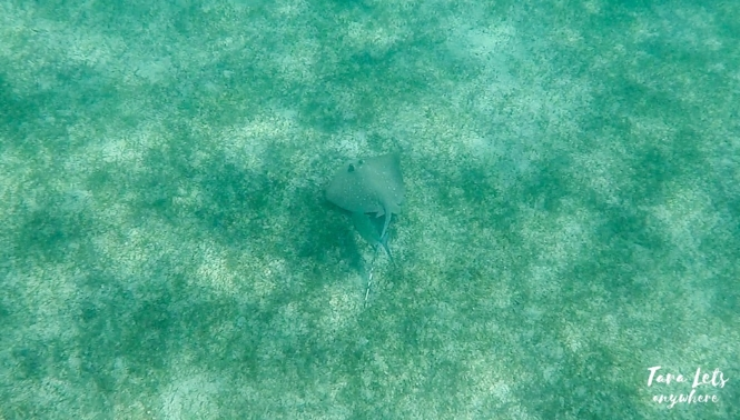 Stingray in Pandan Island