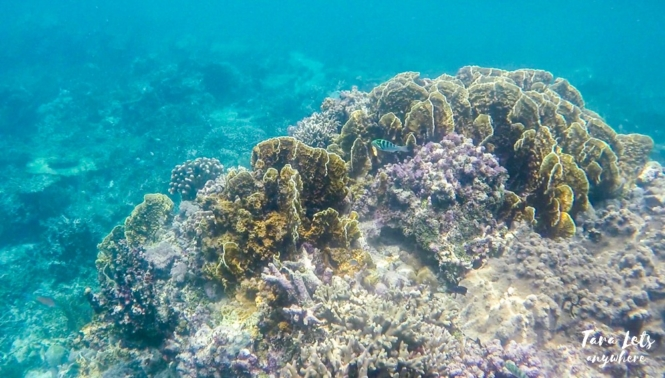 Snorkeling in Roughton Reef