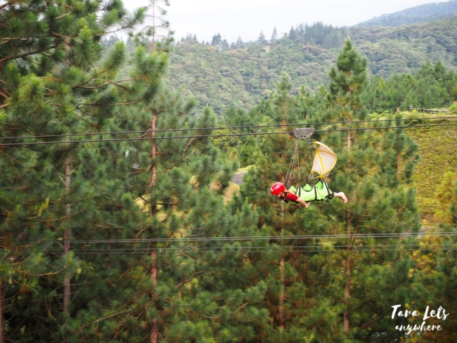 Zipline in Dahilayan Adventure Park