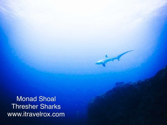 Best dive spots in Southeast Asia - Malapascua, Philippines