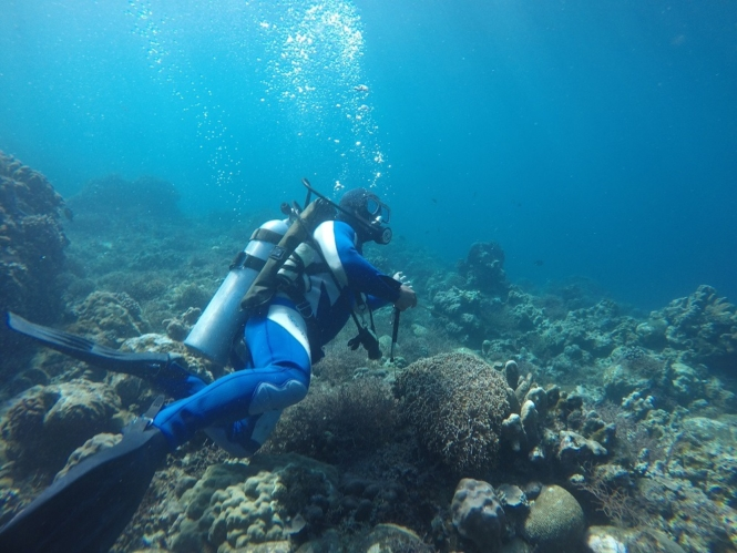 Eagle Point Resort - scuba diving