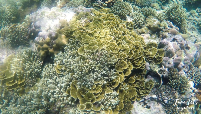 Snorkeling in Tingloy Island
