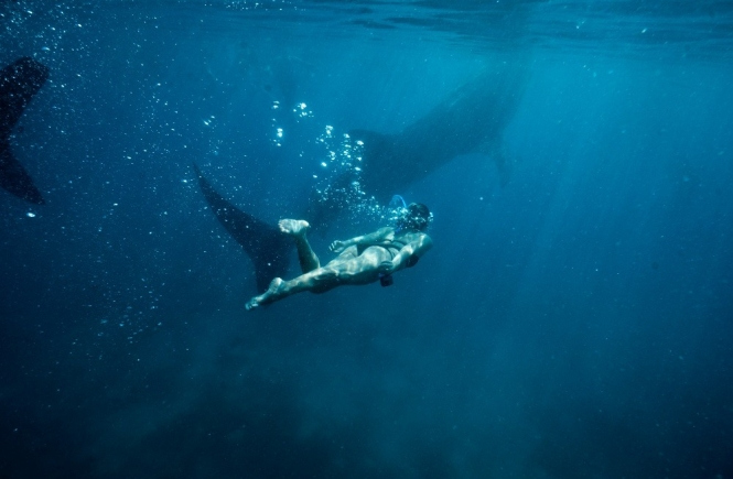 Whale shark in Oslob, Cebu