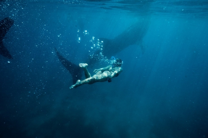 Why we don't recommend the whale shark activity in Oslob, Cebu
