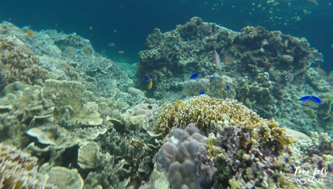 Snorkeling in Pescador Island, Moalboal