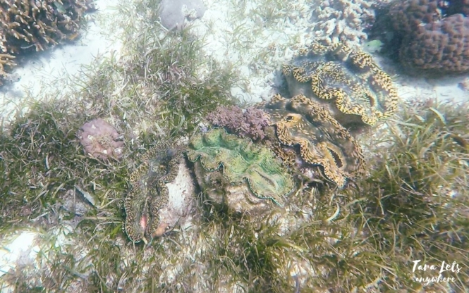 Snorkeling in Mantigue Island - giant clams