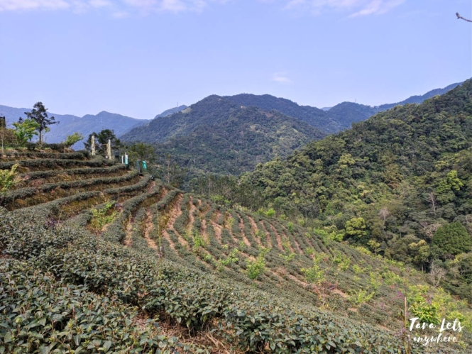 Ba Gua tea plantation in Shiding, Taiwan