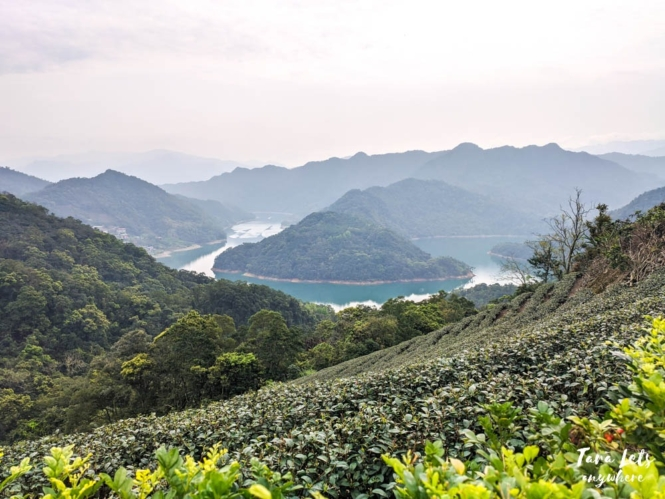 Tea plantation in Thousand Island Lake