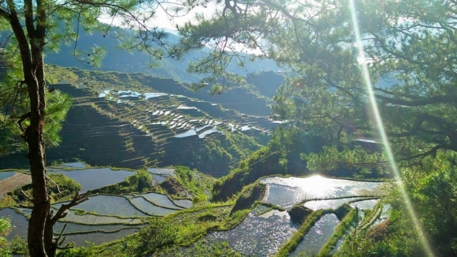 Maligcong Rice Terraces in Bontoc, Mountain Province