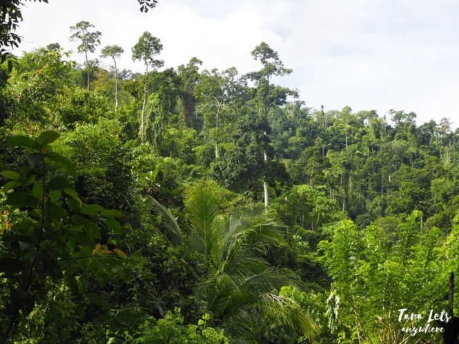 Mountain forest in Quirino